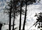Страховка для альпинистов на соседних деревьях